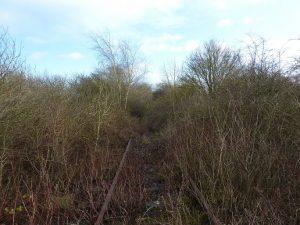 Buckland Bridge overgrown track